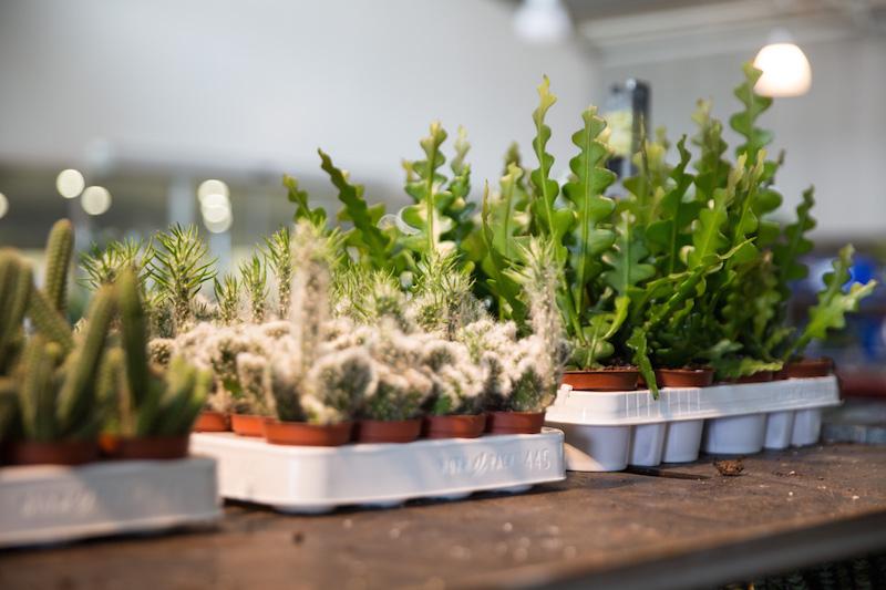 Come curare le piante grasse: ecco tutto quello che c'è da sapere - Lombarda ...