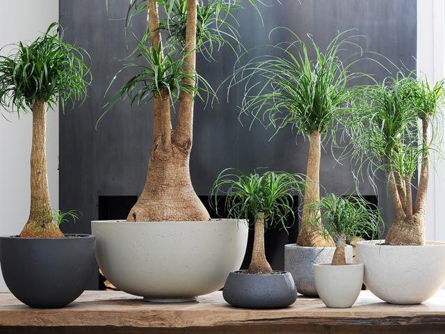 10 piante sempreverdi da appartamento perfette per ogni angolo della casa - L...