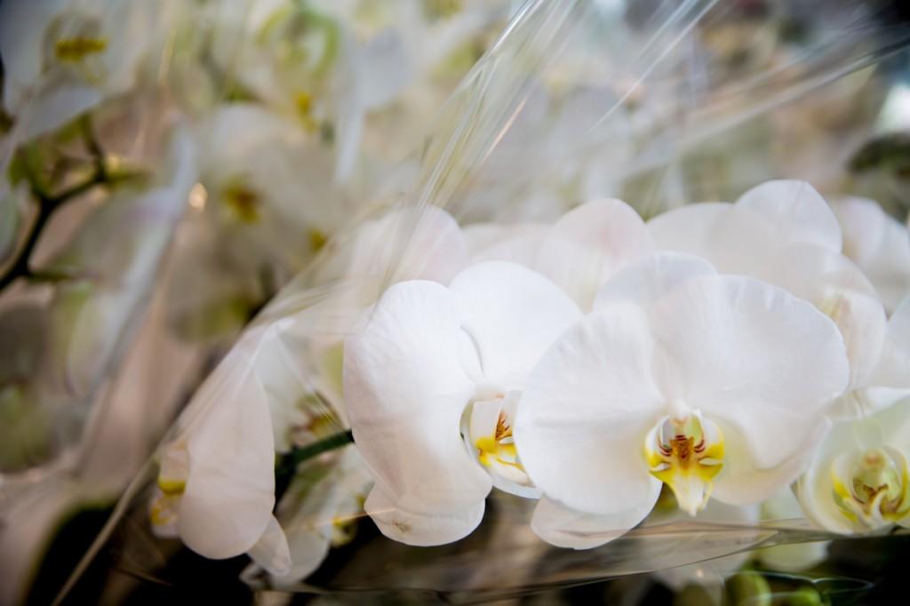 Come riconoscere un 39 orchidea di qualit lombarda flor - Come curare un orchidea in casa ...