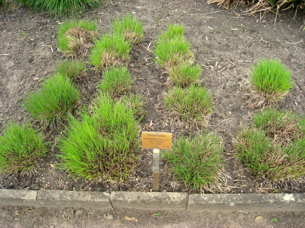 5 piante perenni da coltivare nel giardino della casa al - Piante alte da giardino ...