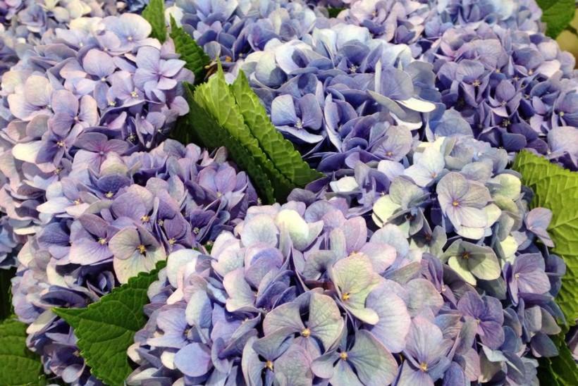 Matrimonio In Giugno : I fiori migliori per un matrimonio a giugno lombarda flor