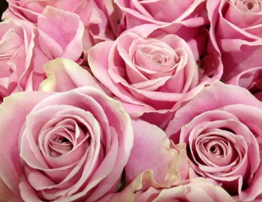 Matrimonio Bed Of Rose : I fiori perfetti per un matrimonio in rosa lombarda flor