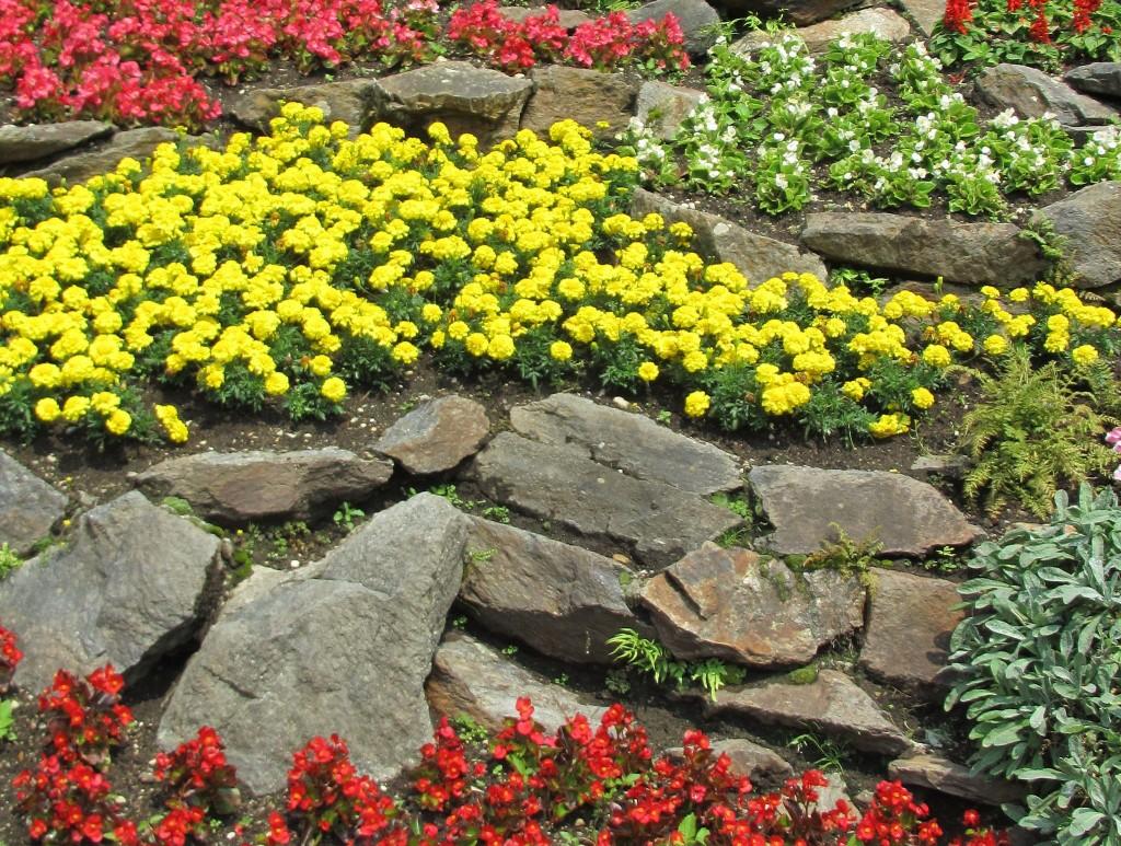 Le piante ideali per un giardino roccioso lombarda flor - Piante per giardino ...