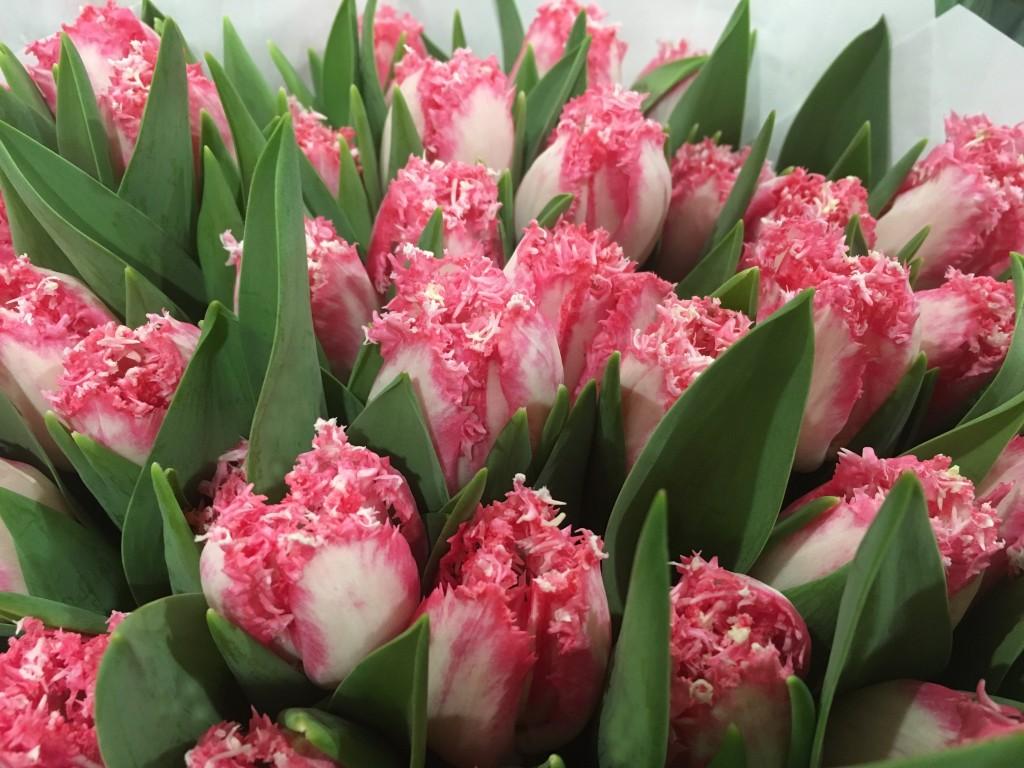 Tulipani Neglige