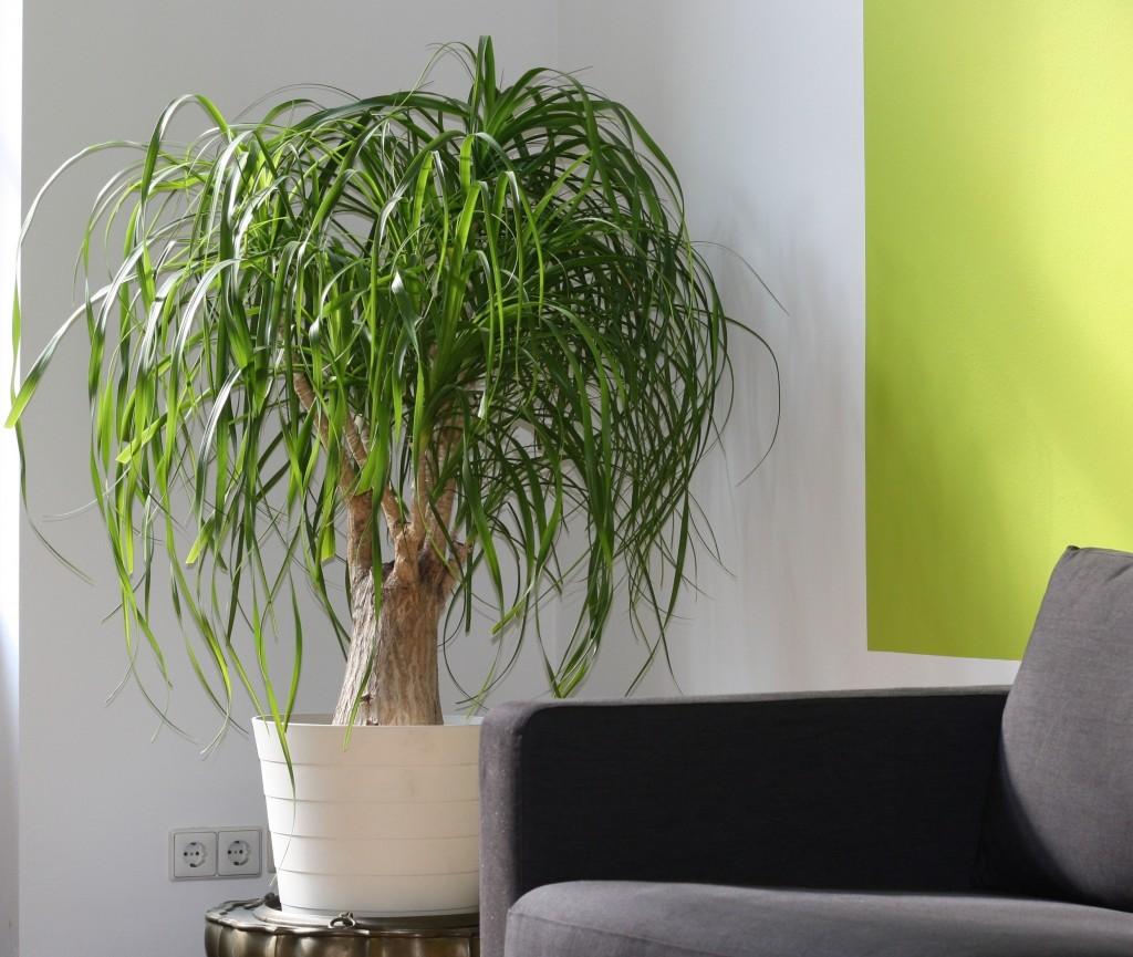 5 benefici delle piante d appartamento lombarda flor for Piante da interno alte