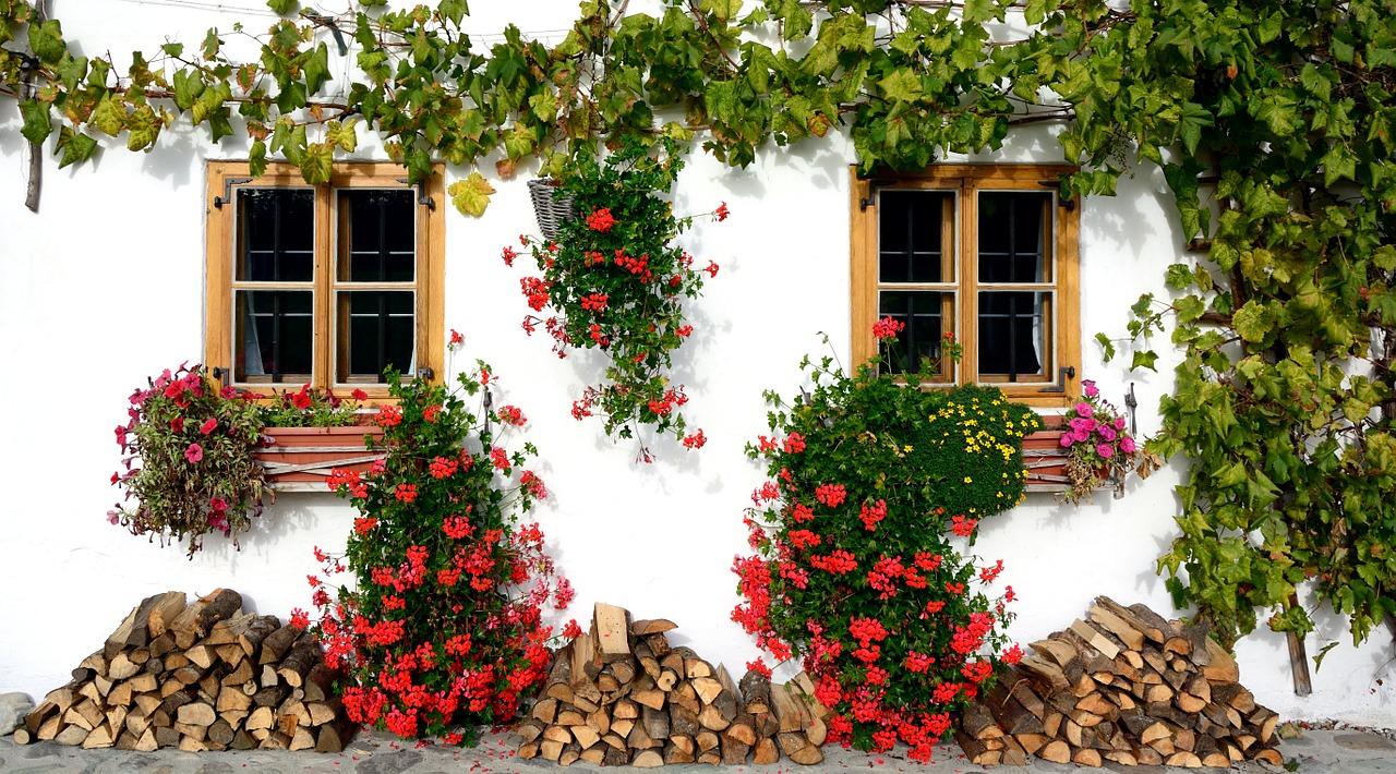 Vasi per piante rampicanti come scegliere il modello for Piante rampicanti in vaso