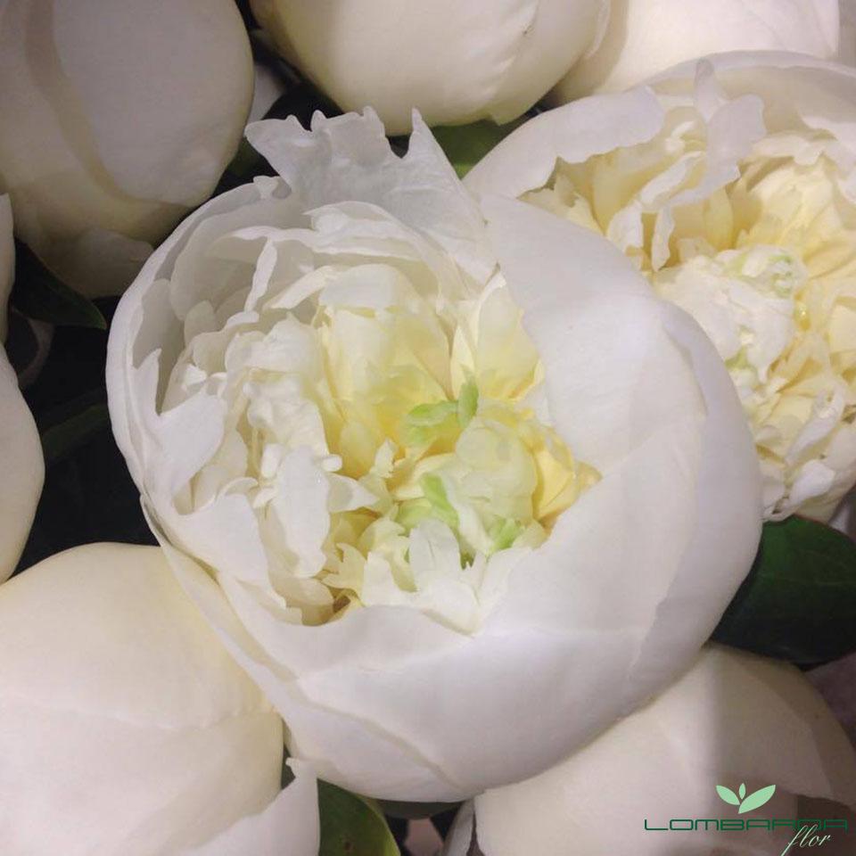 i fiori della settimana 11 maggio 2016