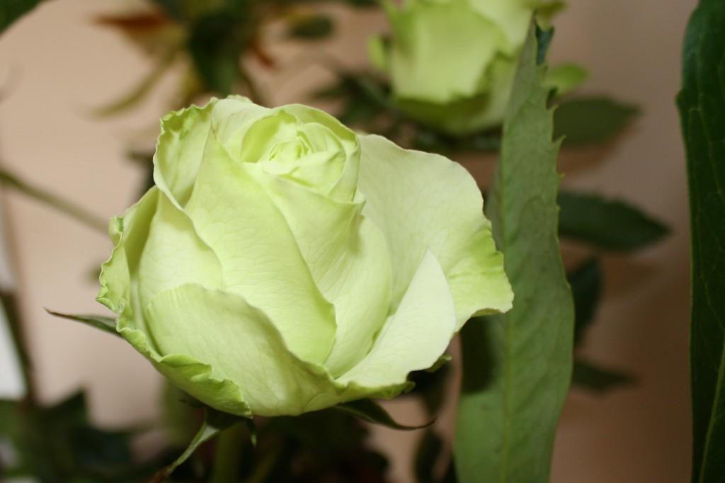 Fiori Verdi Nomi.5 Fiori Per Un Bouquet Di Matrimonio Bianco E Verde Lombarda Flor
