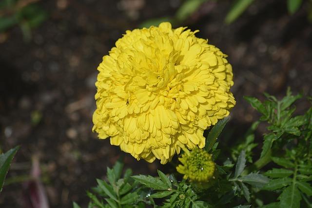 Fiori Gialli Per Bordure.3 Fiori Gialli Per Creare Bordure Perenni Lombarda Flor