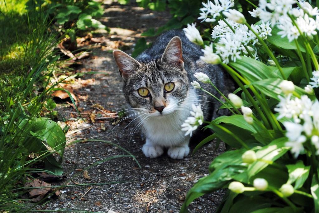 Recinzione Giardino Per Gatti.5 Consigli Per Un Giardino A Prova Di Gatto Lombarda Flor